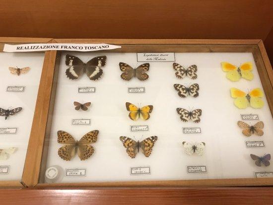 Museo Naturalistico Francesco Mina Palumbo: Museo Naturalistico Francesco Minà Palumbo