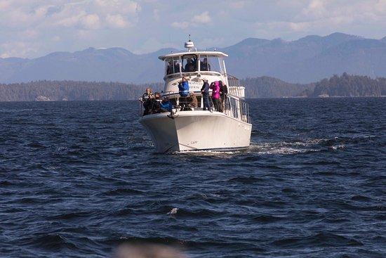 Archipelago Wildlife Cruises: photo0.jpg