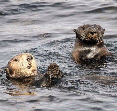 Archipelago Wildlife Cruises: photo1.jpg