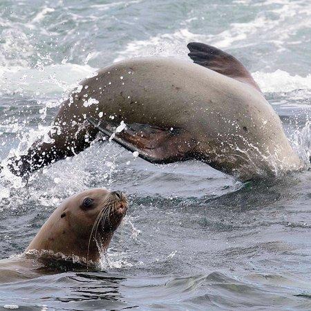 Archipelago Wildlife Cruises: photo2.jpg