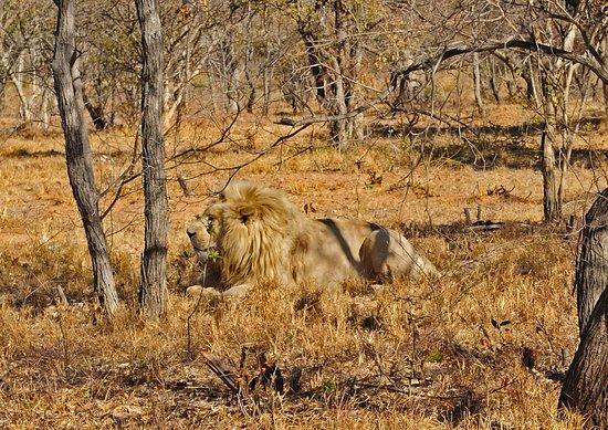 Limpopo Province, South Africa: Parque en Limpopo