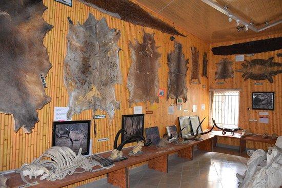 Bauchi, Nigeria: Yankari Game Resort