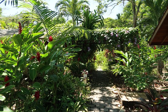 Hotel Chillies: Path to cabins.