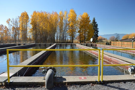 Klamath Fish Hatchery