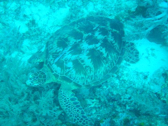 Philippine Fun Divers, Inc.: Saw lots of turtles