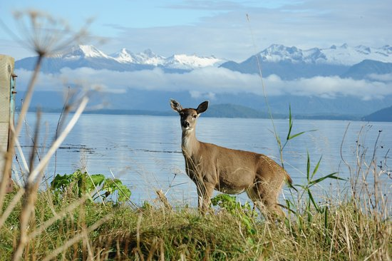 Petersburg, AK: With the Coastal range in the background the deer checks out it's surroundings.