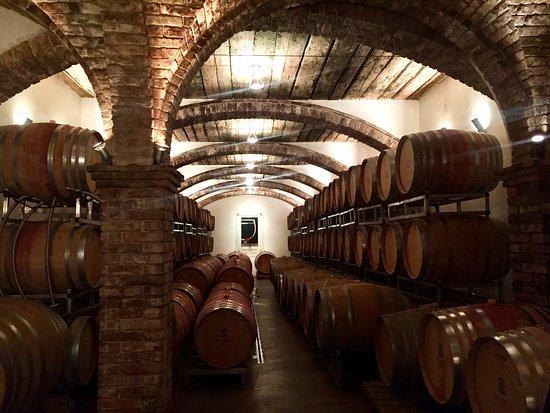 Tattendorf, ออสเตรีย: der Blick in den Weinkeller