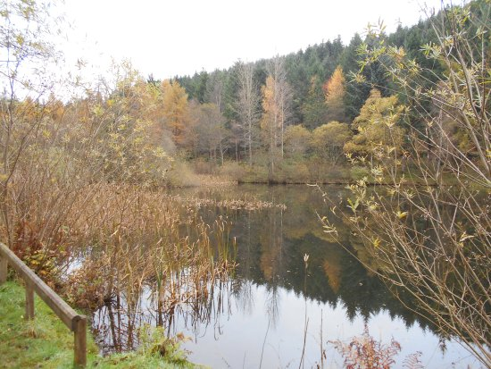Glentress Forest