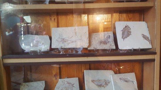 Byblos, Liban : fossils