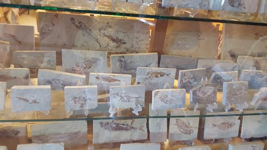 Byblos, Liban : and more fossils