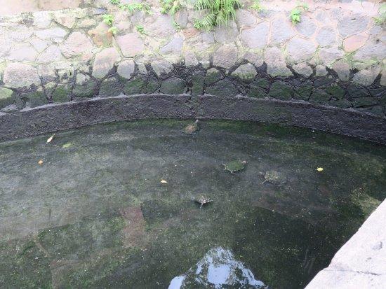 Emperor Jade Pagoda (Chua Ngoc Hoang or Phuoc Hai Tu) : 亀いっぱい