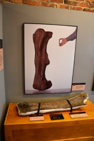 Mount Airy, NC: Bone Size Comparison