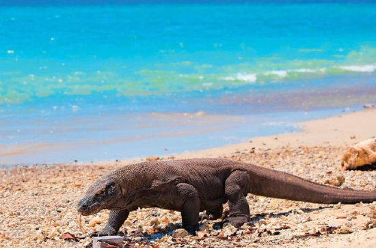 4 Days  3 Nights Komodo Cruise...