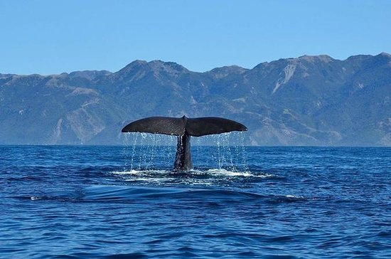 Kaikoura Day Tour med Whale Watching