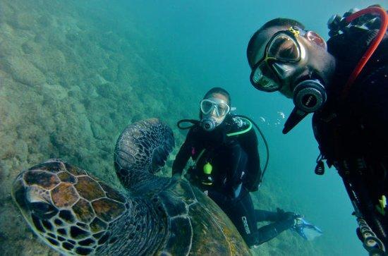 3-Hour Scuba Diving Baptism at ...