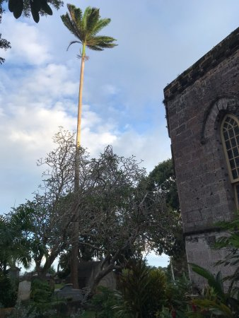 Union Hall, Barbados: Palm Tree