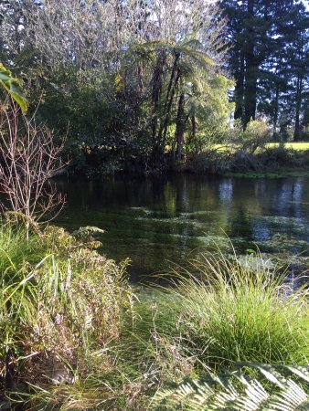 Hamurana, New Zealand: The stream