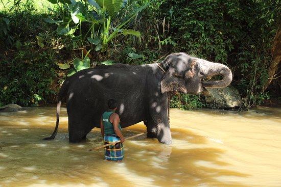 Кегалле, Шри-Ланка: 👍🐘