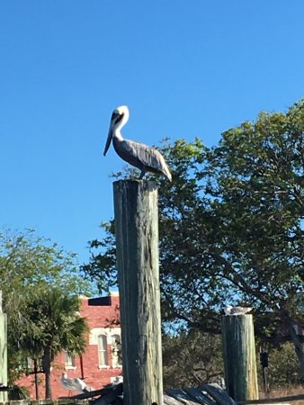 Fernandina Beach, FL: Awesome tour! Great guides!
