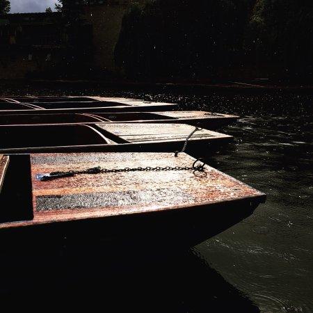 The River Cam : photo0.jpg