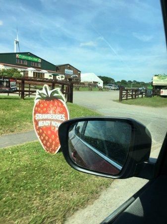 Lifton, UK: 車窓の風景^^