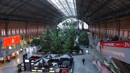 Le jardin tropical de lagare picture of estacion de atocha madrid tripadvisor - Jardin tropical atocha ...