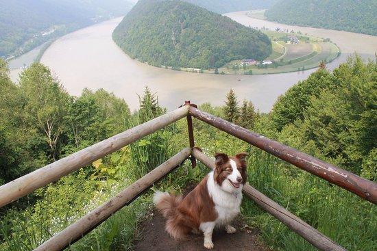 """Schlogen, Austria: Schlögen - Auasztria, - ahol a Duna még jobban """"alászedi a kormányt"""", mint Visegrádnál"""