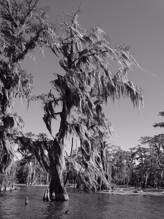 Breaux Bridge, LA: B&W view