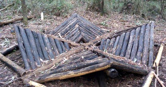 Toolangi Sculpture Trail