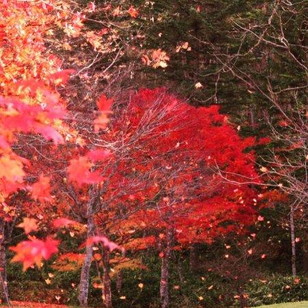 Shikaoi-cho, Japón: ここは落葉がおすすです!