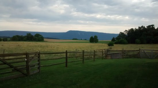 Piney Hill Bed & Breakfast: View from the back of our cottage