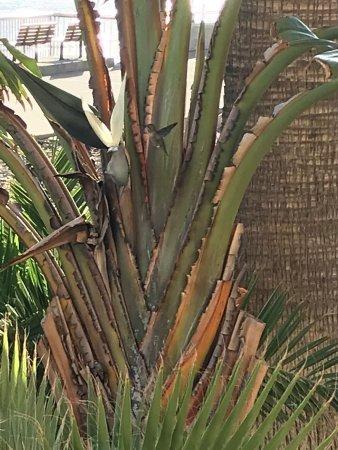 Crowne Plaza Ventura Beach: photo2.jpg