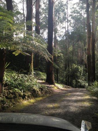 Mount Dandenong, Australia: photo1.jpg