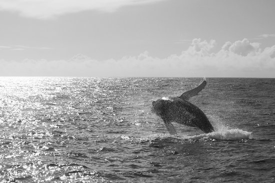 Ventry, Ireland: Humpback whale