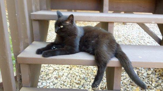 Castle Valley Inn: Katze Amber