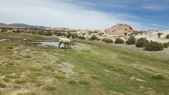 Uyuni, Bolivia: 20171101_125808_large.jpg