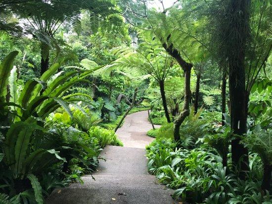 Photo de jardin botanique de singapour for Jardin botanique singapour