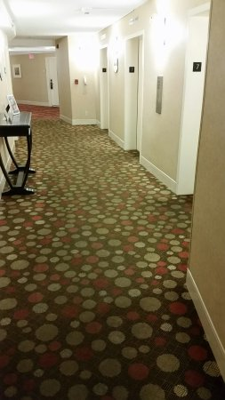 Hilton San Diego Airport/Harbor Island: Dirty carpets on my floor at elevator landing. Restaurant hallway carpet is worse.