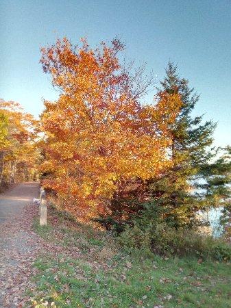 Point Pleasant Park: IMG_20171028_173948_large.jpg
