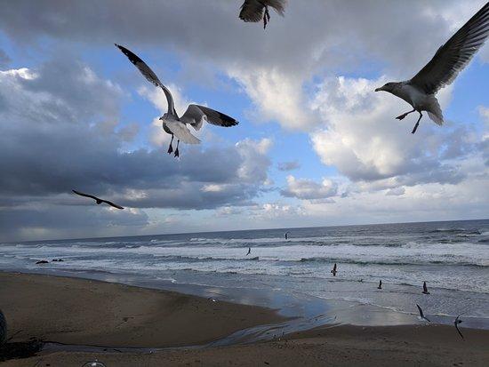 Pelican Shores Inn照片