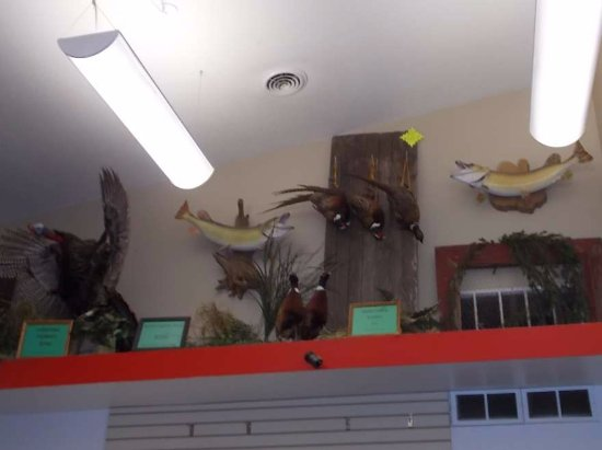Bowman, ND: more mounted birds and fish