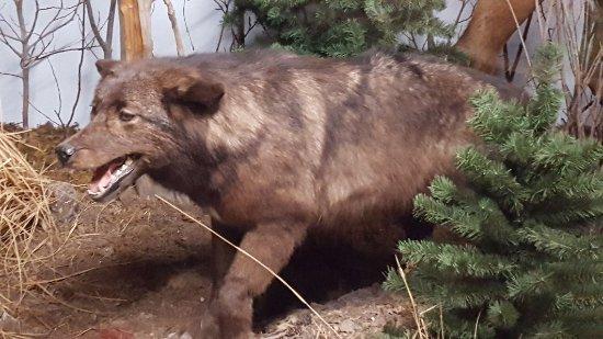 The Den - Jasper's Wildlife Museum : 20171021_152607_large.jpg