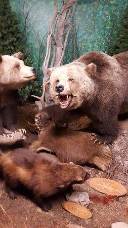 The Den - Jasper's Wildlife Museum : 20171021_152539_large.jpg