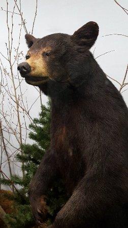 The Den - Jasper's Wildlife Museum : 20171021_152330_large.jpg