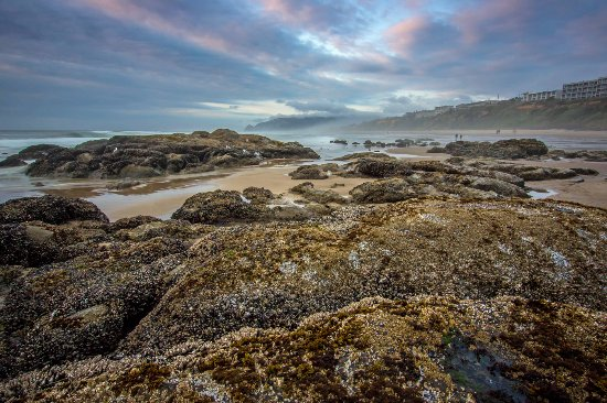 The Coho Oceanfront Lodge: Beautiful Beach