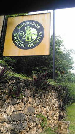 Barbados Wildlife Reserve: IMG_20171103_151731_large.jpg