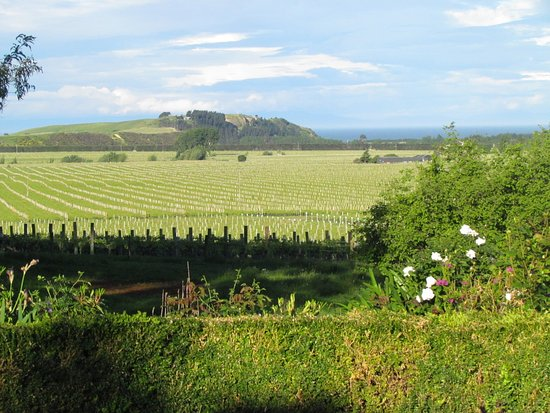 Ugbrooke Country Estate: View from our garden across the vineyards