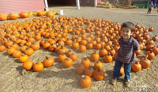 Poughquag, Estado de Nueva York: mini pumpkins