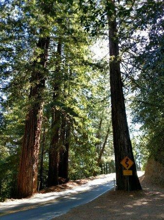 Boulder Creek, แคลิฟอร์เนีย: Road leading into Big Basin