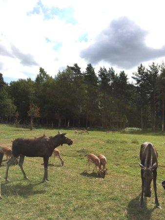 Skullaryd Älgpark